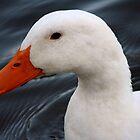 Portrait of a Duck by DebbieCHayes