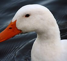 Portrait of a Duck by DebbieCHayes