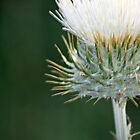 Thistle in White (Unframed) by Corri Gryting Gutzman