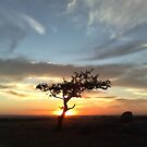 Lone tree by Lois Romer