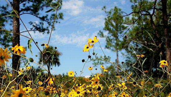 Field of Daisies by Sheryl Unwin