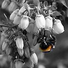 Just The Colour Of The Bee. by Aj Finan