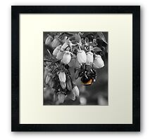 Just The Colour Of The Bee. Framed Print