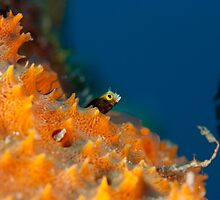 Goby by Paul Lenharr II