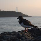 Bird on a rock (Anglet, Pays Basque) by MitchHippie
