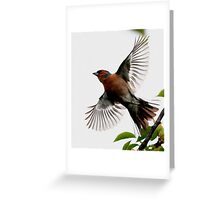Flight Of The Chaffinch Greeting Card