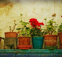 Potted Geraniums by Susie Peek