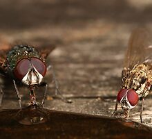 2 flys are better than 1 by Scott Thompson