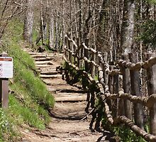 The Appalachian  National Scenic Trail by DIANE KLEVECKA