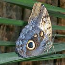 Butterfly 2 by Davies72