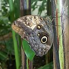 Butterfly 3 by Davies72
