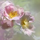  Pastel Pink by Elaine  Manley