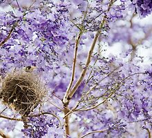 Bird in Jacaranda Tree by eagleyeimages
