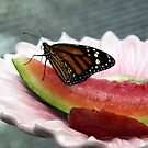 Monarch Butterfly by MDossat