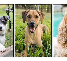 montage of gorgeous dogs by eagleyeimages