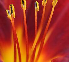vibrant by Iris Mackenzie