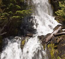 Falls Creek, Mt. Rainier National Park by Barb White