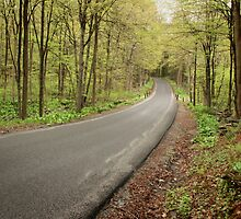 Everett Road in Early May by vvfineartphotog