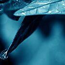 dew drop by Angel Warda