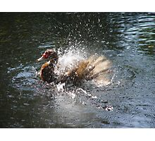 SPLISH, SPLASH, I WAS TAKIN' A BATH... Photographic Print