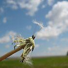 prairie life by essiewall