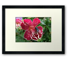 Fly on Mimulus Flower Framed Print