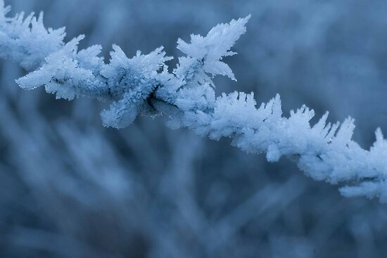 Hoar frost on barbed wire by trevallyphotos
