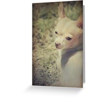 Sun Worshiper Greeting Card