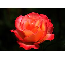 Not A Second Hand Rose Photographic Print
