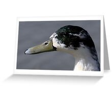 The Mallard Greeting Card
