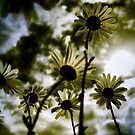 reaching for the sky ..........(sepia) by SNAPPYDAVE