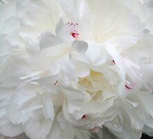 White Peony by Christine Wilson