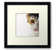 Because Kittens are Angels - I Framed Print