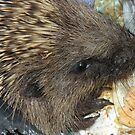 Naughty hedgy in the bin....... by supernan