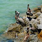 Fun on the Jetty by Sheryl Unwin