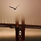 Flying Into the Fog by Leasha Hooker
