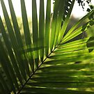 Light through a Palm Leaf by Sea-Change