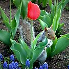 ~Secret Squirrel~ by a~m .