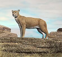Cougar on the Rocks by Walter Colvin