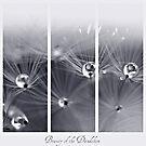 Beauty of the Dandelion by Angel Warda