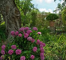 Hydrangeas of Afton Villa St. Francisville by Bonnie T.  Barry