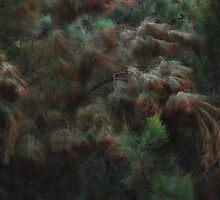 """""""He-She-Oak"""" by debsphotos"""
