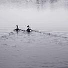 swim. by flightlessXbird
