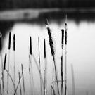 nature. by flightlessXbird