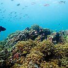 Kokopa Reef Andaman Sea, Thailand by KOKOPEDAL