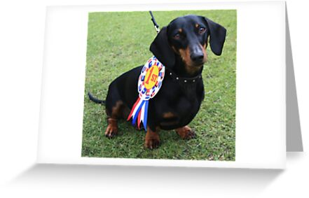 Dachshund Dash Winner 2010 by Christine Oakley