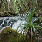 Cephissus Falls, Pine Valley, Tasmania by tasadam