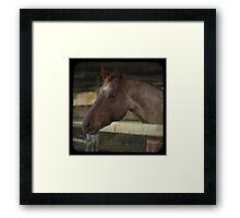 Engaged Horse Framed Print