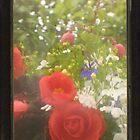 TTV Begonia by missmoneypenny