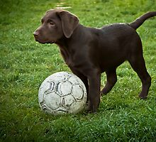 puppy with ball by saswilson